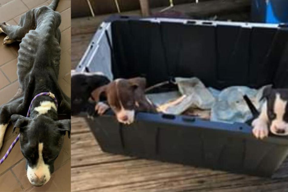 Frank (l.) und die Welpen wurden abgemagert und verwahrlost im Keller entdeckt.