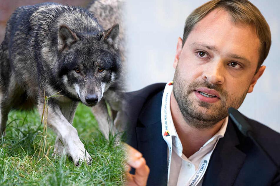 """""""Der Wolf wird zur Gefahr"""": Mit dieser neuen Kampagne will CDU durchstarten"""