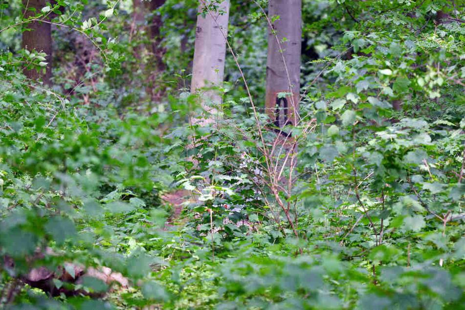 Im Großen Tiergarten soll es zu der Attacke gekommen sein, als der Rentner durch den Park gelaufen ist. (Symbolbild)