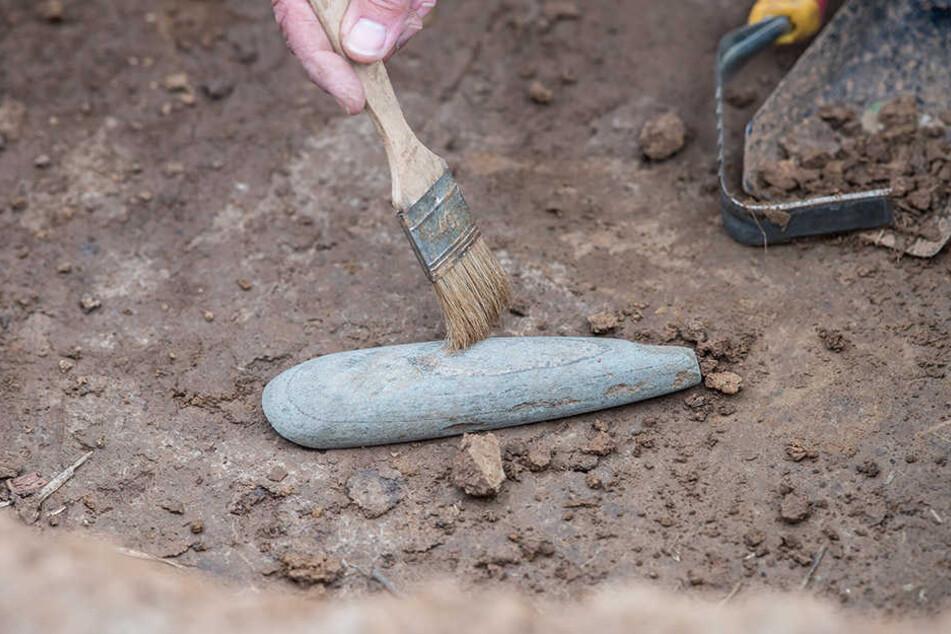 Eine Grabungstechnikerin gräbt aus einem 7000 Jahre alten Grab eine Beil-Spitze aus Stein aus, die damals von den Angehörigen als Grabbeigaben mit in die Gräber gelegt wurden