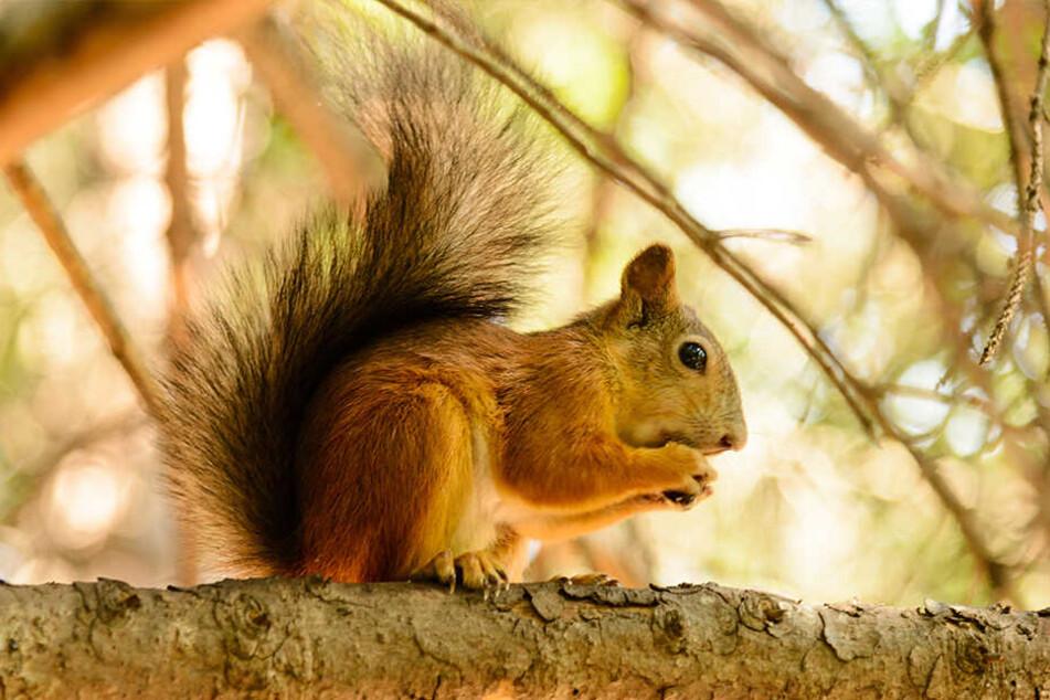 Mickey Paul (35) soll ein Eichhörnchen mit Crystal Meth gefüttert haben.
