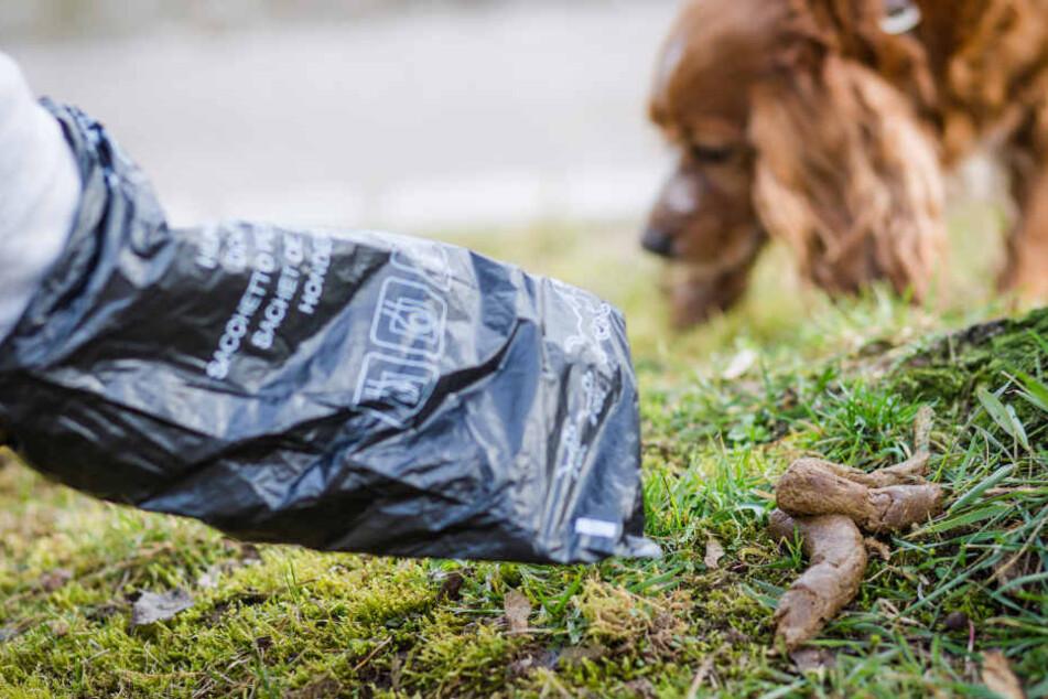 Hundebesitzer fanden die Idee des Politikers scheinbar nicht sinnvoll. (Symbolbild)
