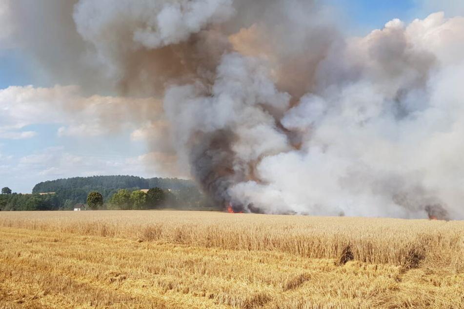Zehn Hektar Feld brannten ab.