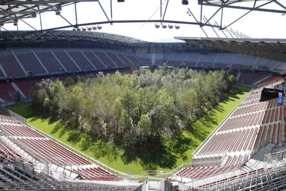 Blick aus der Tribüne auf die 299 Bäume.