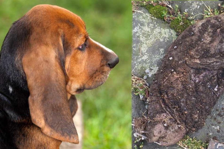 Frau vergräbt brutalen Hundeköder