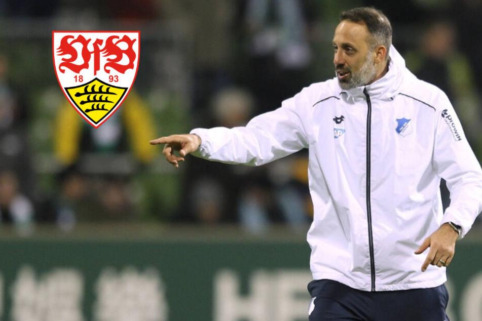 VfB Stuttgart hat neuen Coach: Matarazzo folgt auf Walter!