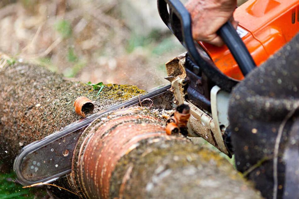 Zeugen zu Baum-Massaker in Lichtenstein gesucht