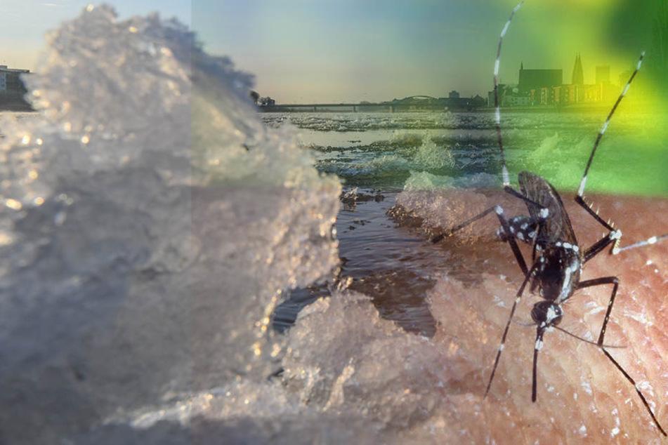 Die eisigen Temperaturen machen den Mücken nichts aus. (Symbolbild)
