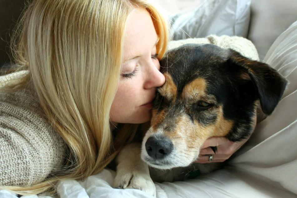 Hunde haben einen besonderen Geruchssinn. (Symbolbild)