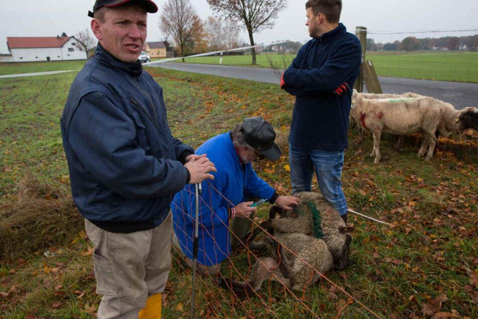 Bauer Martin Just (re.) entdeckte am Sonntagmorgen sieben tote Schafe auf seiner Koppel in Cunnewitz.