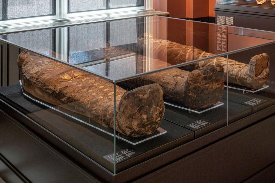 Dresden: Sachsens Kurfürst hatte Leichen im Keller: Forscher sind Augusts Mumien auf der Spur