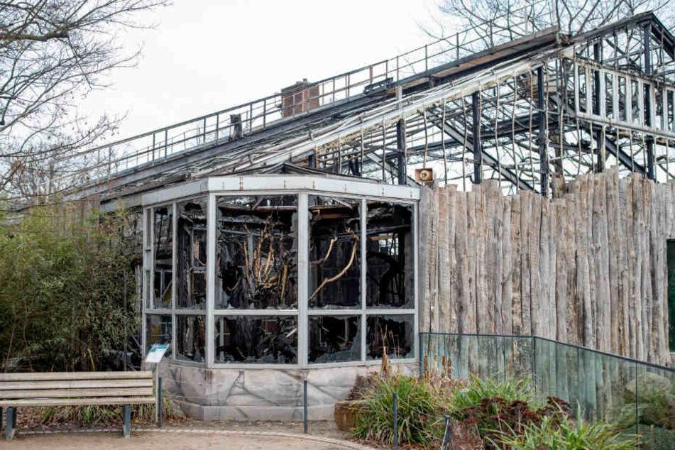 Das völlig ausgebrannte Affenhaus im Zoo Krefeld.