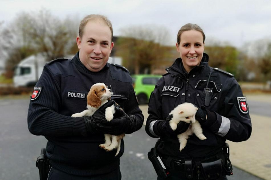 Polizisten haben in Hannover acht Welpen aus verbotenem Handel sichergestellt.