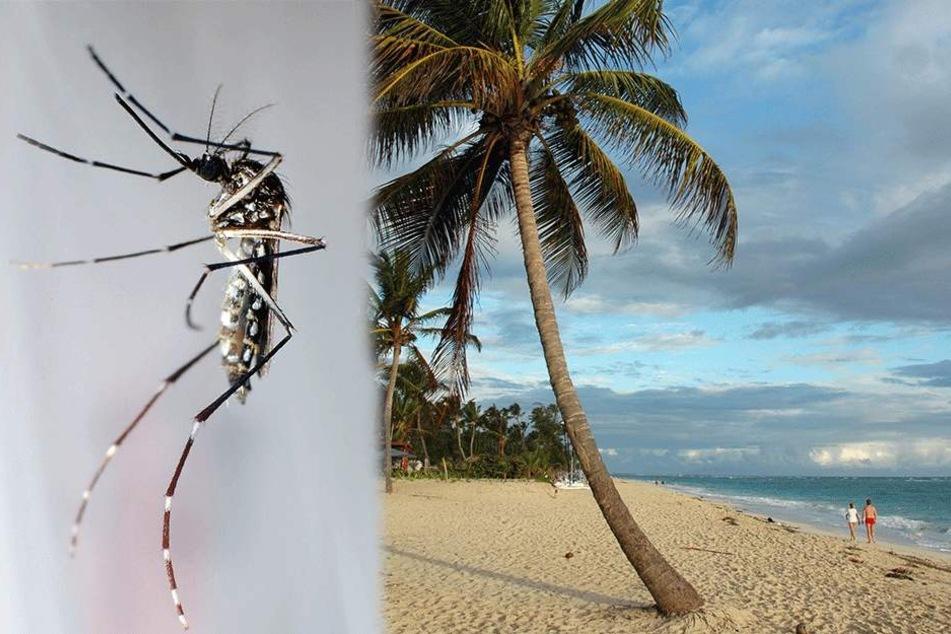 Tolle Strände, sorgloses Leben? Aber Vorsicht vor den Mücken!
