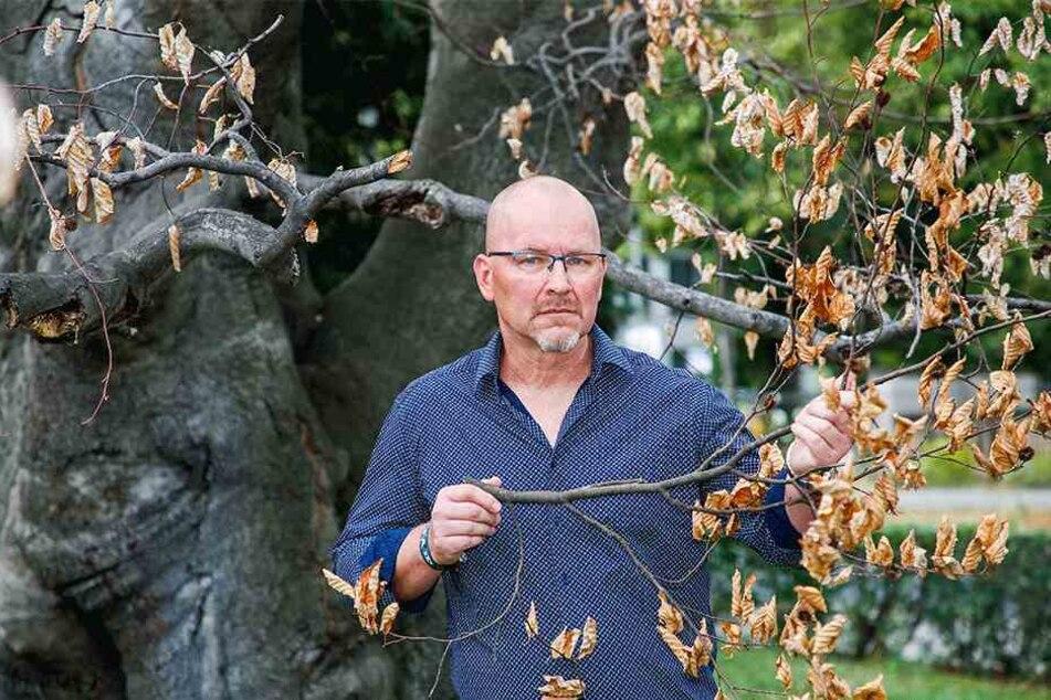 Dresdens Baumchef Steffen Löbel (53) sorgt sich um den Zustand der Bäume am Straßenrand.