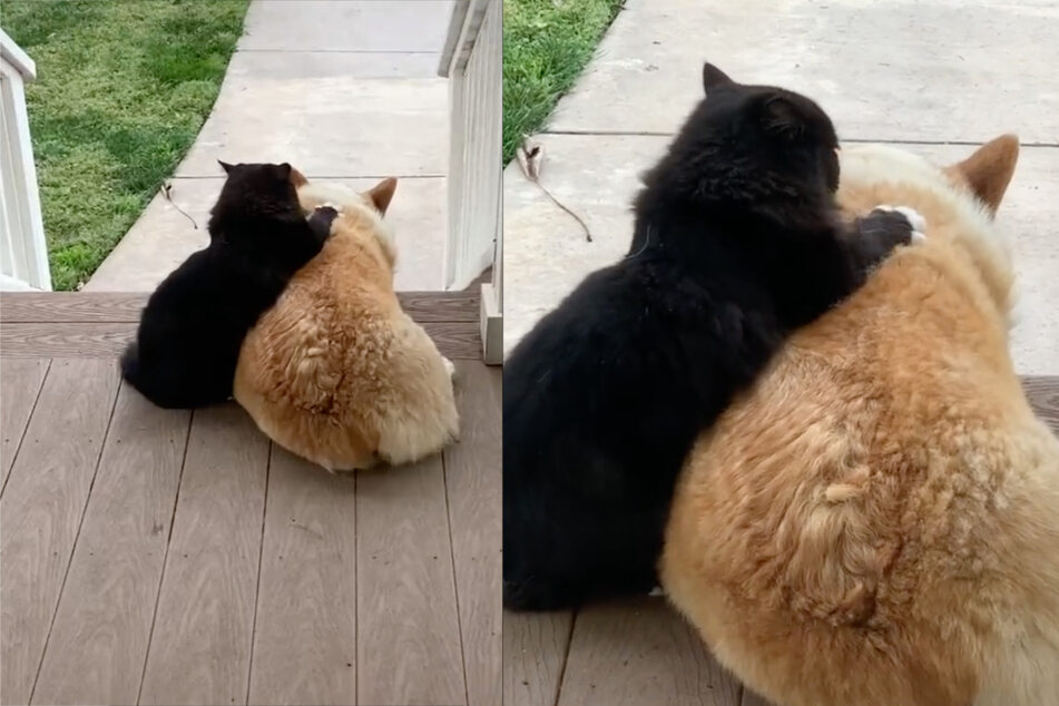 TikTok's favorite odd couple: dog and cat melt hearts with adorable video