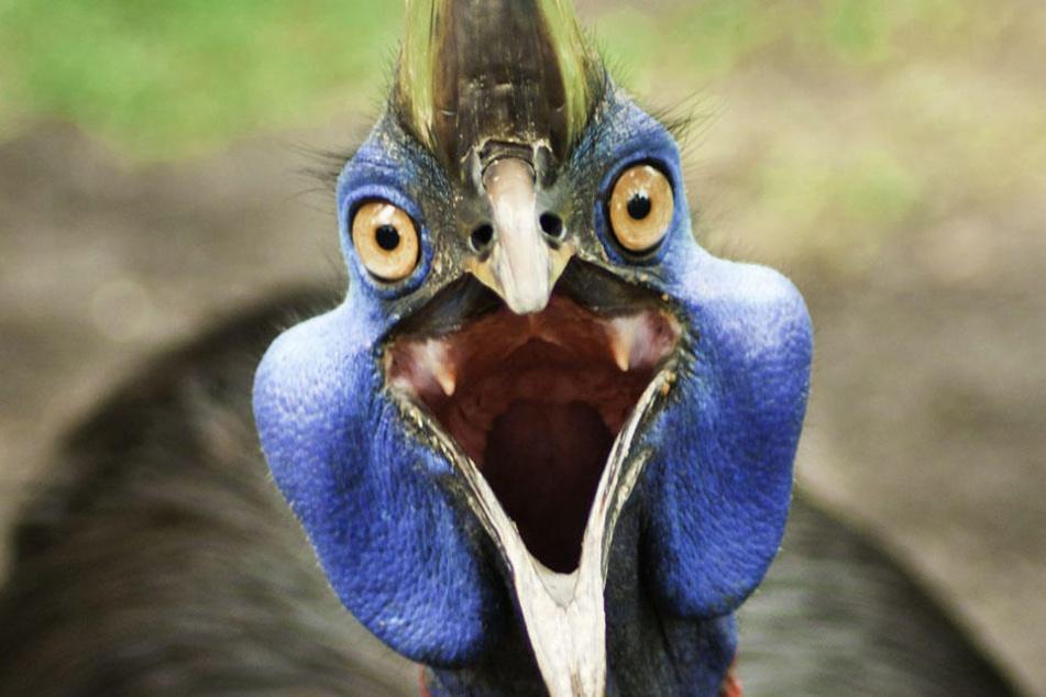 Die Vögel erwarten, von den Menschen gefüttert zu werden.