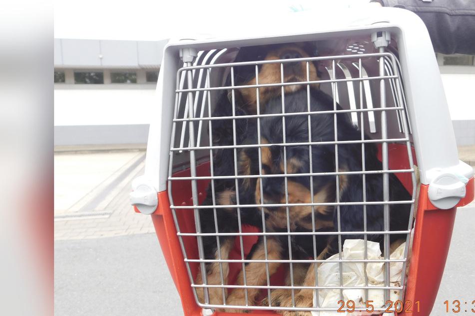 Auf verdreckten Ladeflächen: Polizei beschlagnahmt Hundewelpen und kleine Katze
