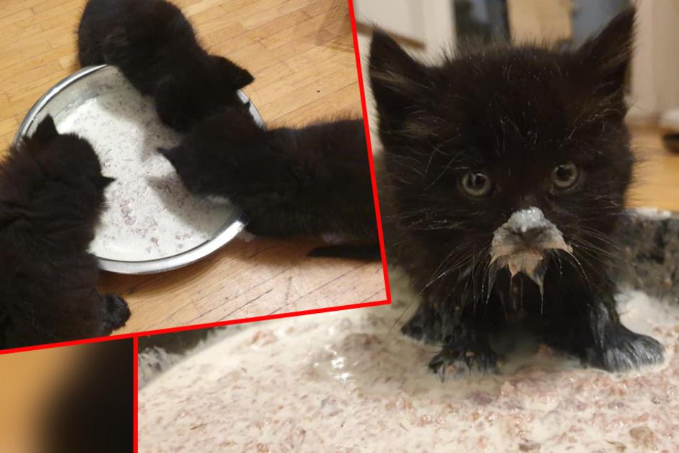 Sie schrien tagelang um Hilfe: Winzige Katzenbabys vor Tod bewahrt!