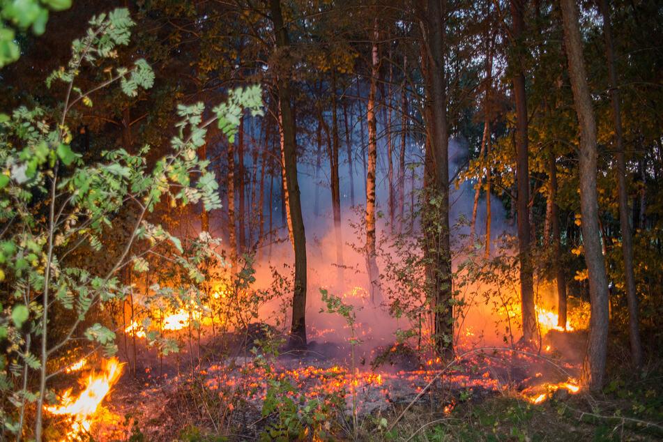 Die Waldbrandgefahr in Sachsen ist hoch (Symbolbild).