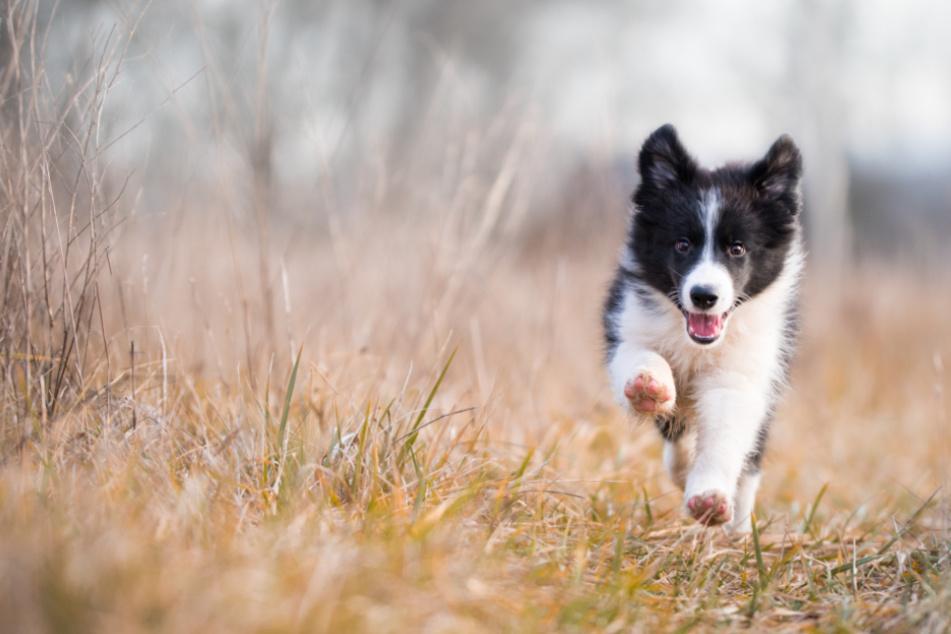 Hunde erziehen: 5 Fehler, die Du beim Rückruf vermeiden solltest