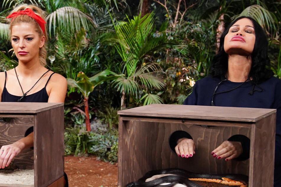 """Dschungelshow, Tag 12: """"Hab mich wirklich auf 'nen Hoden oder Penis gefreut"""""""