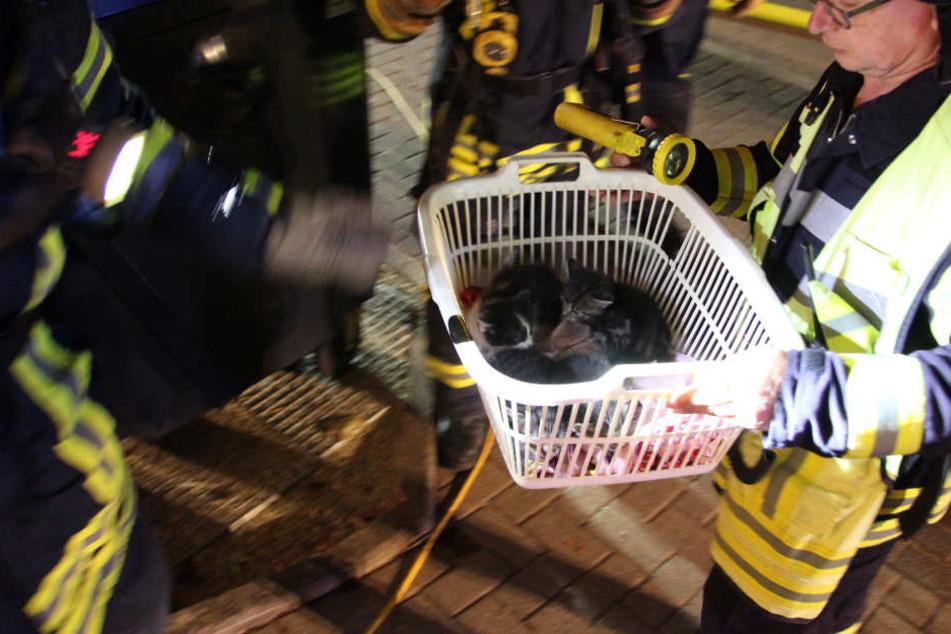 Brand im Keller! Feuerwehr evakuiert Bewohner und rettet vier Katzen aus Wohnung
