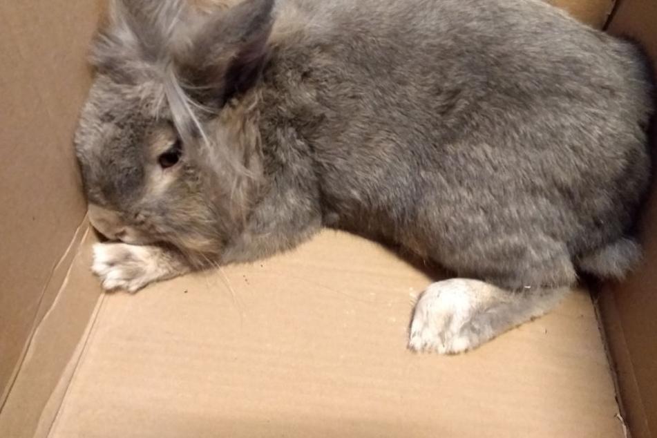 Kaninchen zum Sterben im Müll zurückgelassen