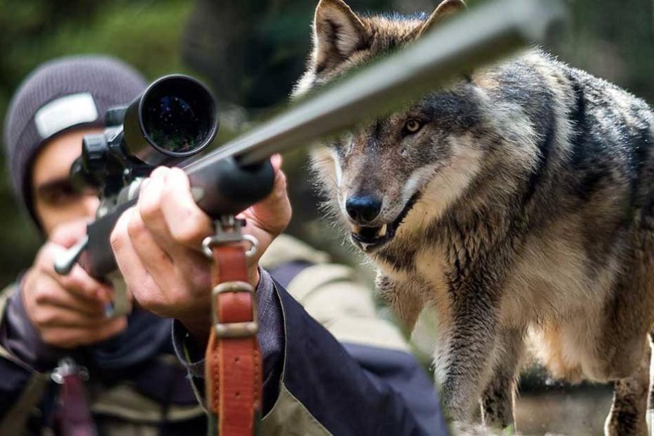 Hier wird jetzt ein hauptberuflicher Wolfsjäger gesucht