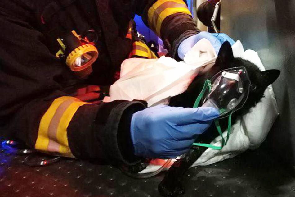 Tierischer Notfall: Süße Mieze in Flammenhölle entdeckt und gerettet