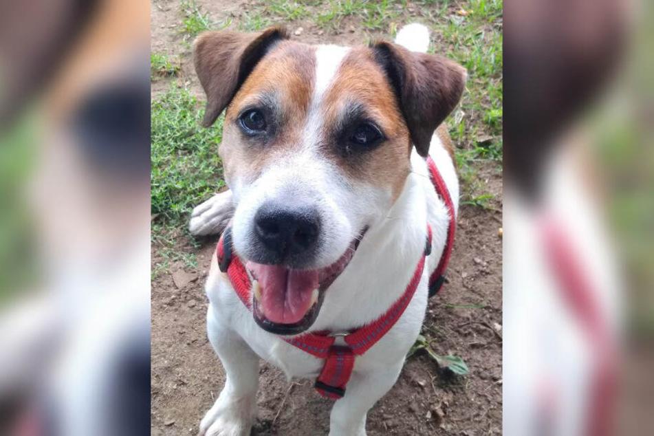 Kalli ist ein etwa neun Jahre alter Hund im Tierheim Hamburg.