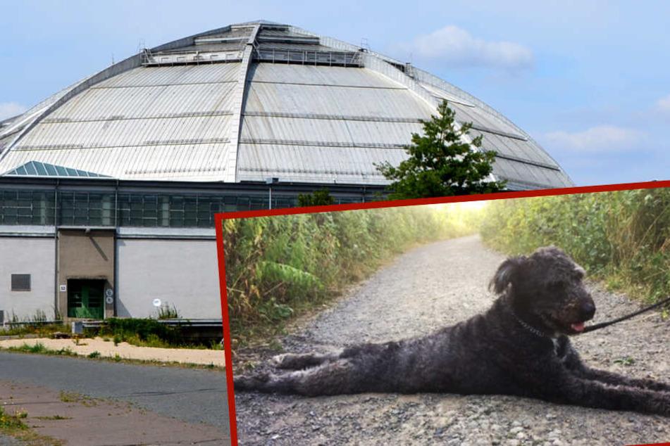 Leipzig: Tier-Drama in Leipzig: Hund bei Gluthitze ausgesetzt