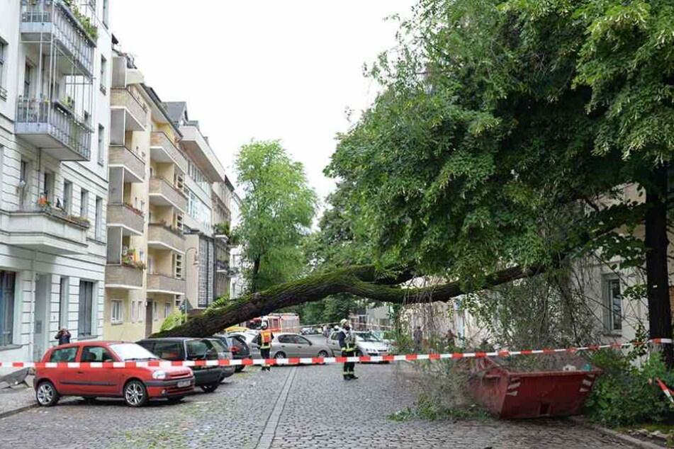 In Neukölln stürzte nach tagelangen Regenfällen bereits ein Baum um.