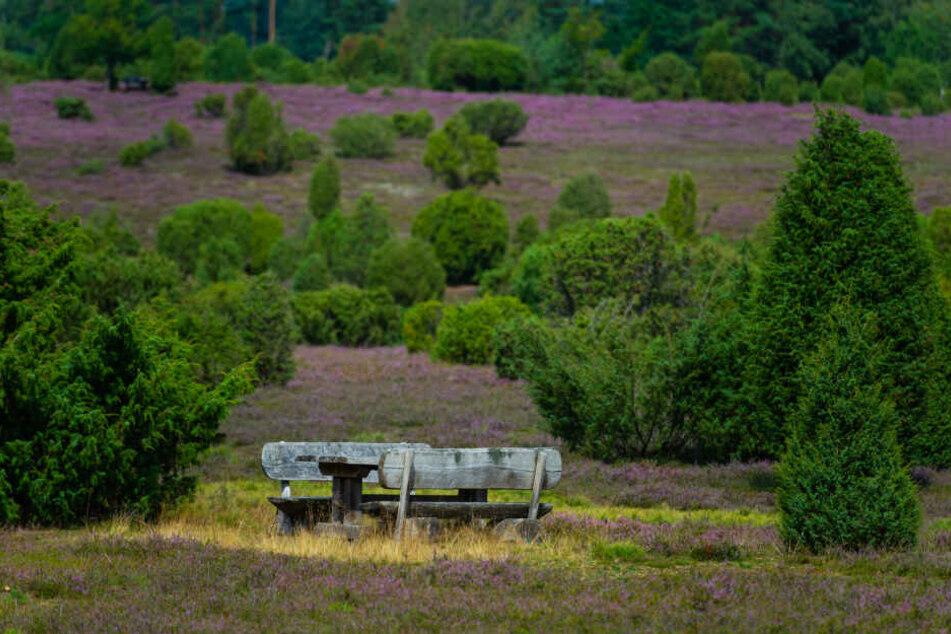 Die Lüneburger Heide ist ein beliebtes Ausflugsziel im Norden.