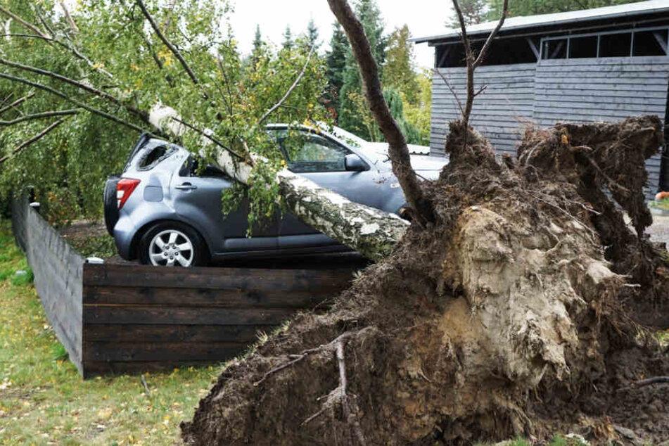 In Krauschwitz stürzte eine Birke auf ein parkendes Auto. Der kleine Geländewagen erlitt sofort enormen Schaden.