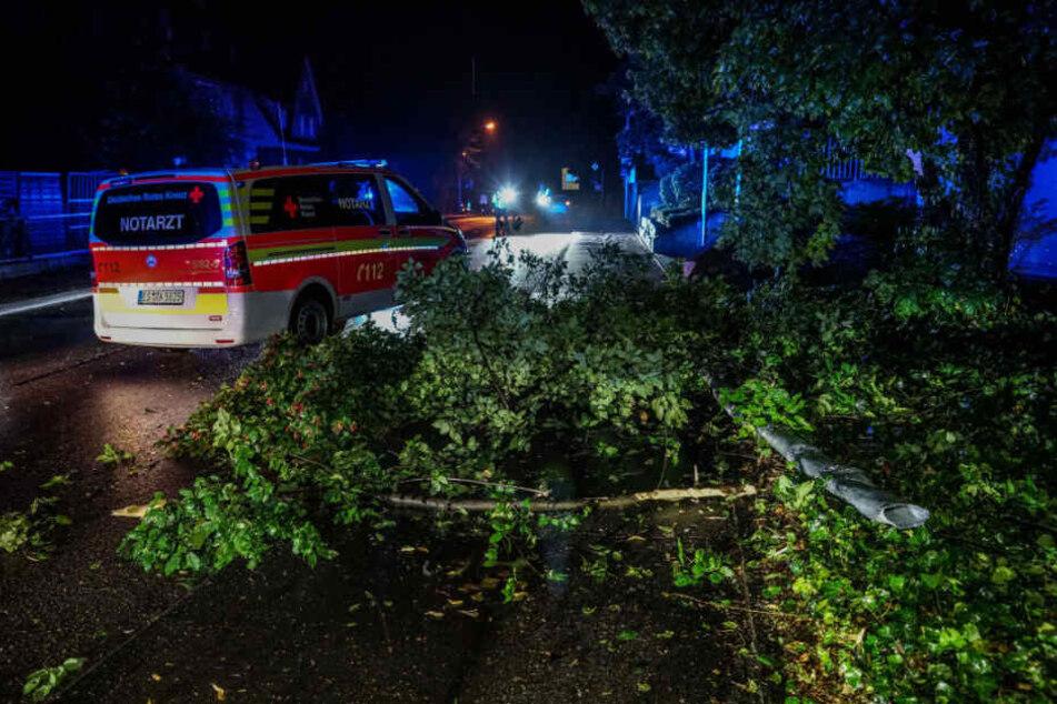 Zwei Bäume fielen dem Unfall auch zum Opfer.