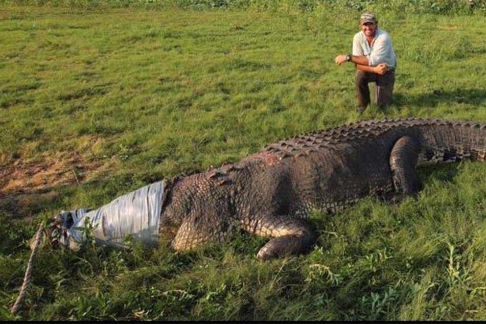 Jäger fängt 800-Kilo-Krokodil und erhitzt die Gemüter