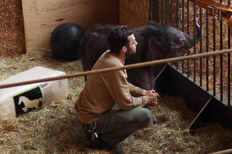 Tag und Nacht kümmern sich die Pfleger des Zoos um das Elefantenbaby, das im Januar zur Welt kam.