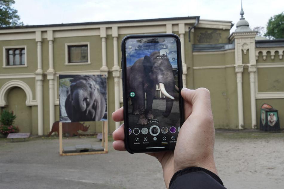Snapchat und Kölner Zoo verbünden sich beim Artenschutz