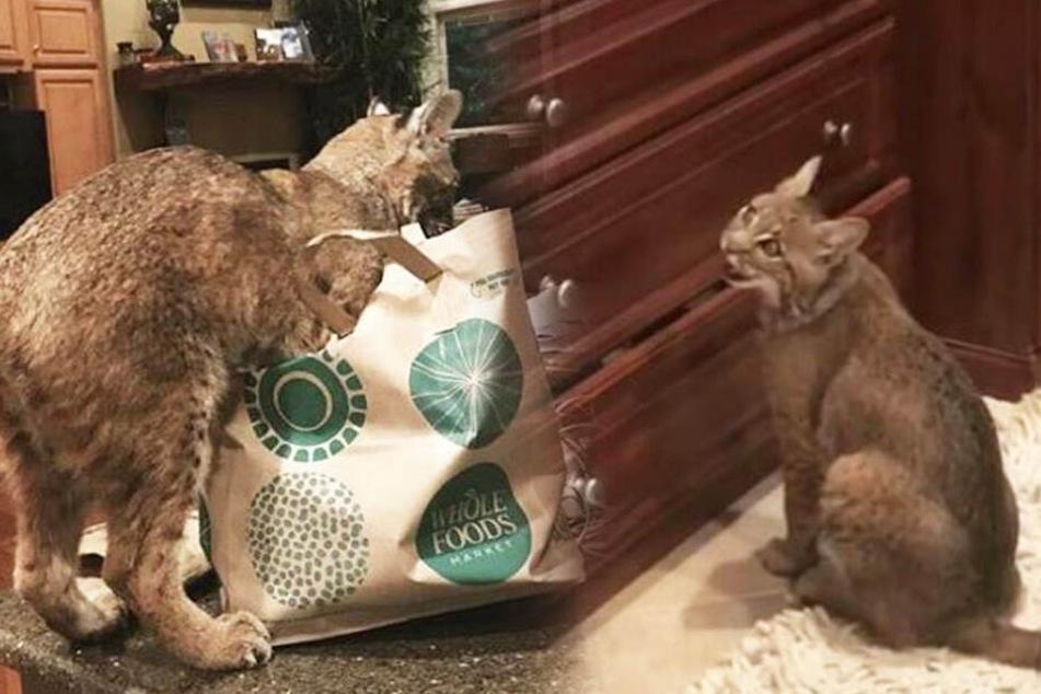 Frau rettet Katze, die sich in ihrem Gartenzaun verhedderte, doch nichts ist so, wie es scheint