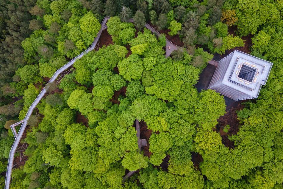 Der Baumwipfelpfad in Heringsdorf führt in einer Höhe von bis zu 23 Metern über fast eineinhalb Kilometer zu einem 33 Meter hohen Aussichtsturm.