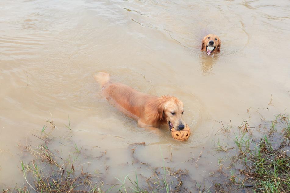 Auch Hunde kühlen sich gerne im Badesee ab. Der sollte allerdings sauber sein. (Symbolbild)