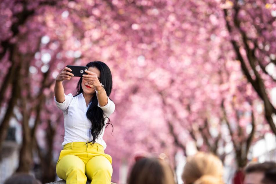 Sonne scheint: Die Kirschblüte in Bonn startet!