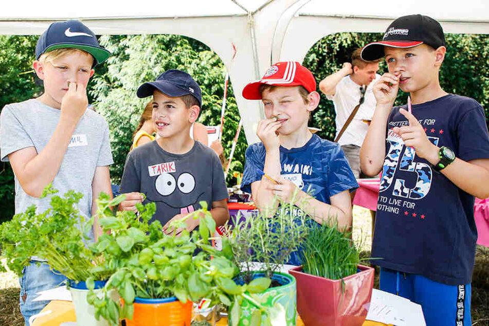 Dresden: Obst, Gemüse, Kräuter: Schlemmer-Unterricht für Kids