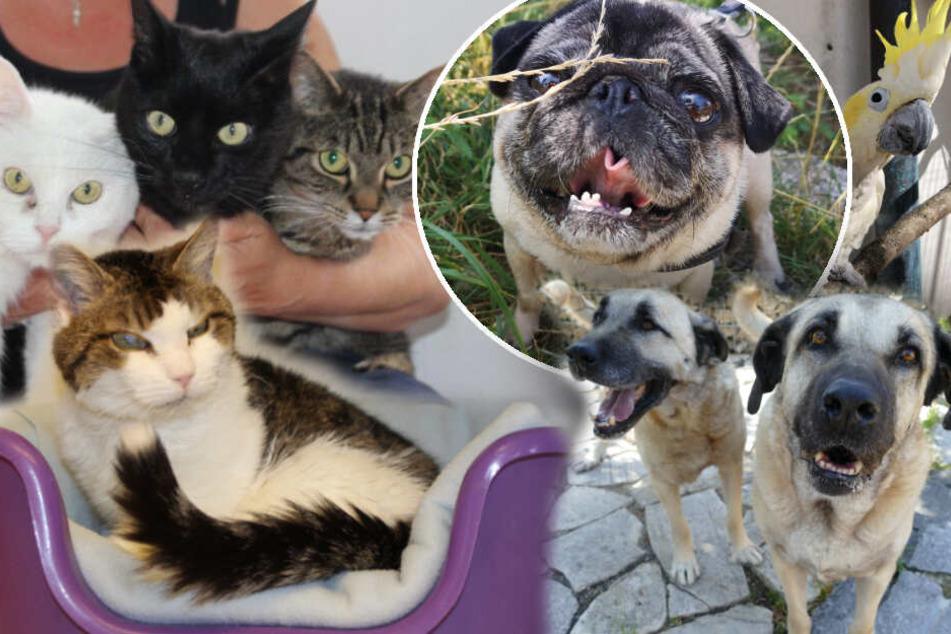 Mops Rüdiger und diese Tiere brauchen Deine Hilfe! Hast Du ein Plätzchen frei?