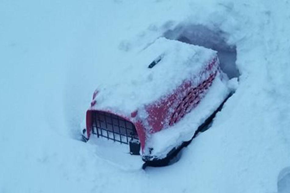 Die Box war voller Schnee, die Katze noch drin.