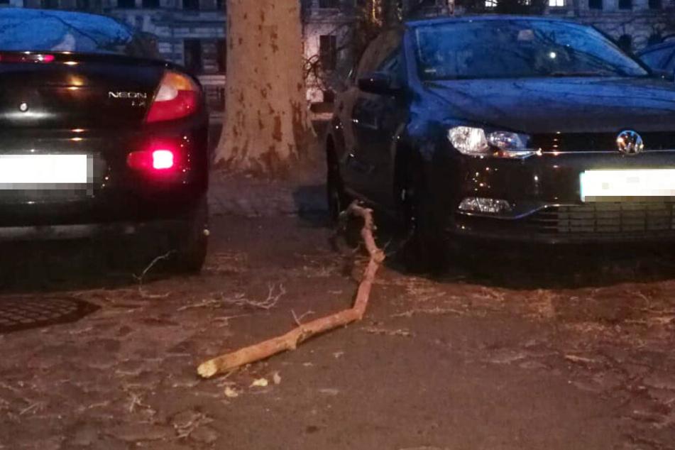 Am Leipziger Floßplatz landete dieser dicke Ast neben zwei geparkten Autos.