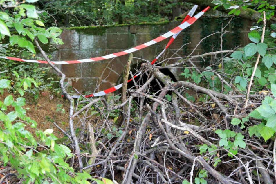 Beim Geocaching: Zwei Männer finden Skelett im Wald
