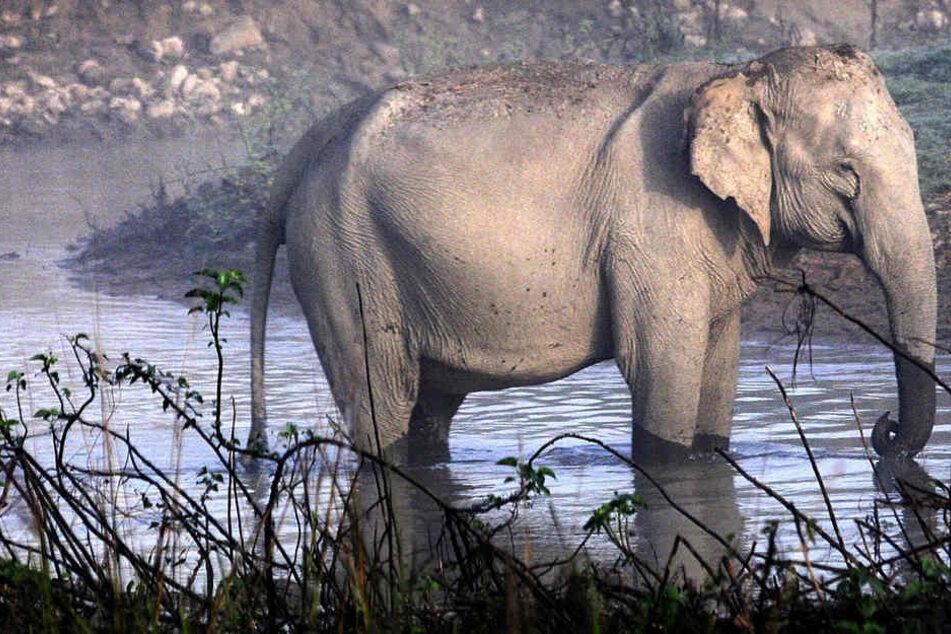 Ein 50 Mann starkes Team hat den Elefanten am Freitagabend schließlich aufgespürt und getötet.
