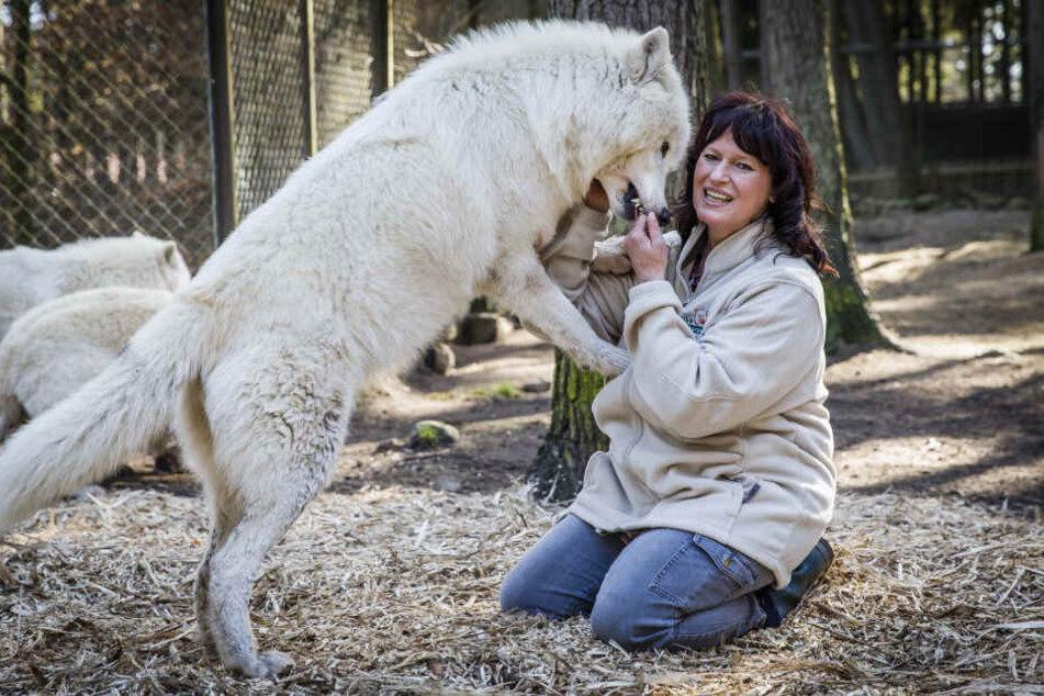 """Sie ist die neue """"Mutti"""" vom kleinen Wolf: Rudelführerin Tanja Askani im Wildpark Lüneburger Heide"""